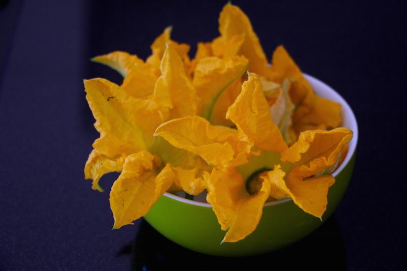 Blüten der Zucchini